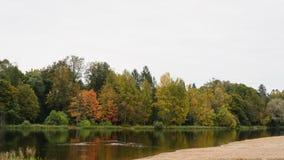 与反射的秋天树在一个小湖在cludy早晨 免版税库存图片