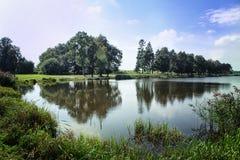 与反射的美好的森林风景在水中 免版税库存照片