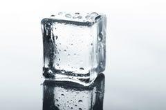 与反射的透明冰块在白色 免版税库存图片
