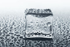与反射玻璃的透明冰块用水滴下,单色 库存照片