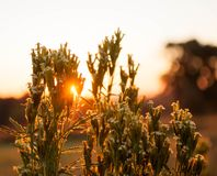 与发光在他们的早晨光的花 库存照片