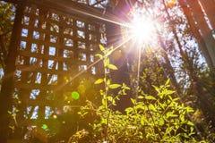 与发光在绿色新芽的透镜火光的阳光 库存照片