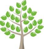 与发光的叶子的树 库存例证
