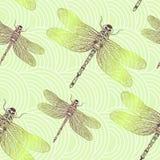与发光的蜻蜓的无缝的传染媒介样式 库存照片