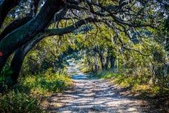 与发光通过公园的叶子的太阳的一串森林足迹在奥兰多,佛罗里达 库存图片