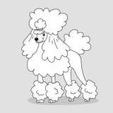 与发型的典雅的修饰的在灰色背景的长卷毛狗和羽毛 印刷品横幅groomer略写法着色的剪影 向量例证
