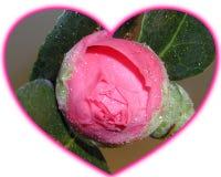与发芽的花的心形的特写镜头在白色背景 库存图片