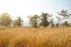 与发茬领域的秋天风景 免版税库存图片