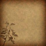 与梨主题的布朗葡萄酒花卉纸 库存照片