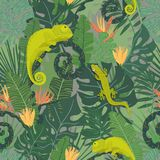 与变色蜥蜴的热带样式 库存图片