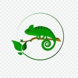 与变色蜥蜴商标的概念 库存图片