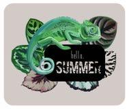 与变色蜥蜴的口号你好夏天 免版税图库摄影