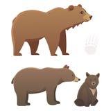 与另外动画片的汇集涉及白色背景 传染媒介broun和黑美国熊 设置野生生物 向量例证