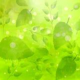 与另外叶子样式的绿色背景 免版税图库摄影