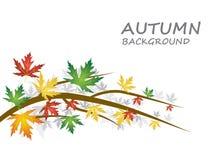 与另外种类的秋天背景上色了叶子 库存照片