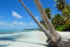 与可可椰子树、清楚的水和蓝天的桑迪加勒比海滩 免版税库存图片