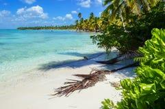 与可可椰子树、清楚的水和蓝色海的桑迪加勒比海滩在多米尼加共和国 库存图片