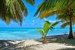 与可可椰子树和蓝色海的桑迪加勒比海滩 免版税库存图片