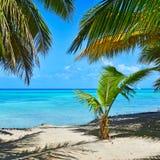 与可可椰子树和蓝色海的桑迪加勒比海滩 Saon 库存照片