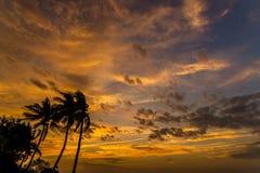 与可可椰子树的日落时间,春武里市,泰国 免版税库存照片