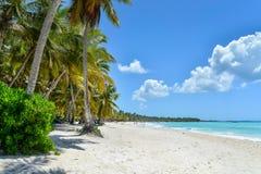 与可可椰子树的桑迪加勒比海滩 免版税库存图片