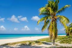 与可可椰子树的沙滩,加勒比 免版税图库摄影