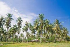 与可可椰子树的热带海滩 免版税库存图片