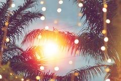 与可可椰子树的被弄脏的轻的bokeh在日落 免版税库存照片