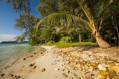 与可可椰子的美丽的热带海滩 酸值张 免版税图库摄影