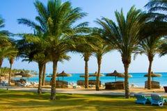 与可可椰子结构树的热带海滩 免版税图库摄影
