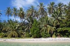 与可可椰子结构树的热带空白沙子海滩 库存照片