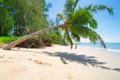 与可可椰子结构树的美丽的热带海滩 免版税图库摄影