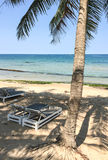 与可可椰子结构树的美丽的热带海滩 免版税库存照片