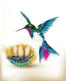 与可实现的蜂鸟的充分五颜六色的背景和嵌套  免版税库存照片