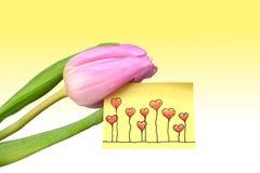 与可爱的问候的桃红色郁金香 库存图片
