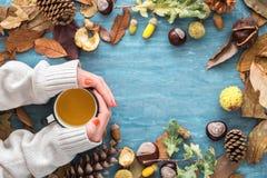 与叶子、栗子、橡子、杉木锥体和妇女手的秋天背景在拿着热的茶的毛线衣 顶视图,平的la 库存照片