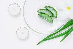 与叶子、花和candels的新芦荟维拉切片在白色b 库存照片