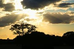 与叶子剪影的剧烈的天空  免版税库存照片