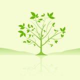 与新鲜的照片库存的叶子图像绿色&字体大树v照片教学网图片