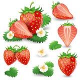 与叶子和开花传染媒介集合的成熟草莓 库存例证