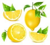 与叶子和开花的新鲜的柠檬 向量例证
