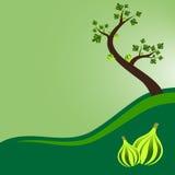 与叶子和果子的无花果树 免版税库存照片