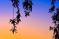 与叶子和横渡的颜色的日落 免版税库存照片