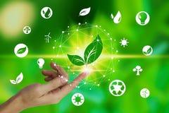 与叶子和环境象的手指接触在自然背景,技术生态概念的网络连接 免版税库存图片