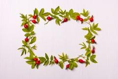 与叶子和红色花,莓果的方形的框架 平的位置 库存照片
