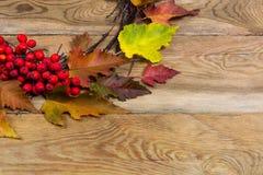 与叶子和花楸浆果的感恩花圈在木后面 库存照片