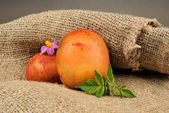 与叶子和花的嫩土豆土豆在麻袋布 免版税库存照片