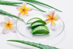 与叶子和花的新芦荟维拉切片在白色背景 库存图片