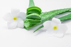 与叶子和花的新芦荟维拉切片在白色背景 免版税库存图片