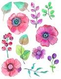 与叶子和花,水彩的五颜六色的花卉收藏我 免版税库存照片